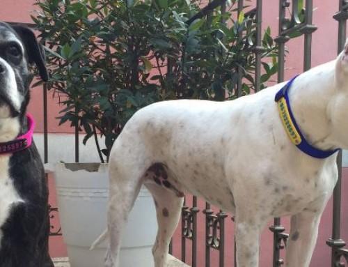 La estrella de aitanastar.com me llevó hasta Vasco, un perro sordo